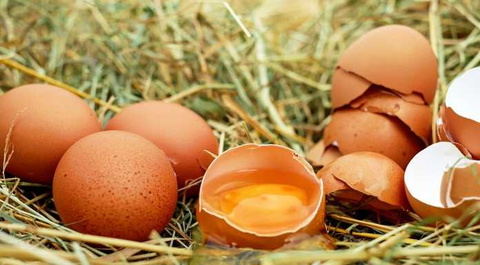 the eggs controversy - eggs