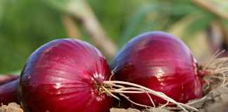 use ONION juice for faster hair growth