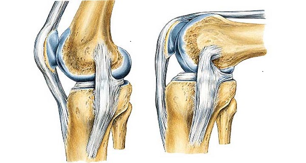 exercises for injured knee ligaments