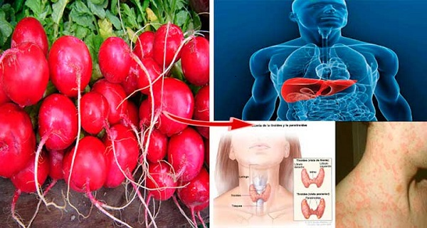 thyroid and digestion