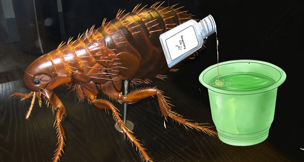 kill flea eggs naturally