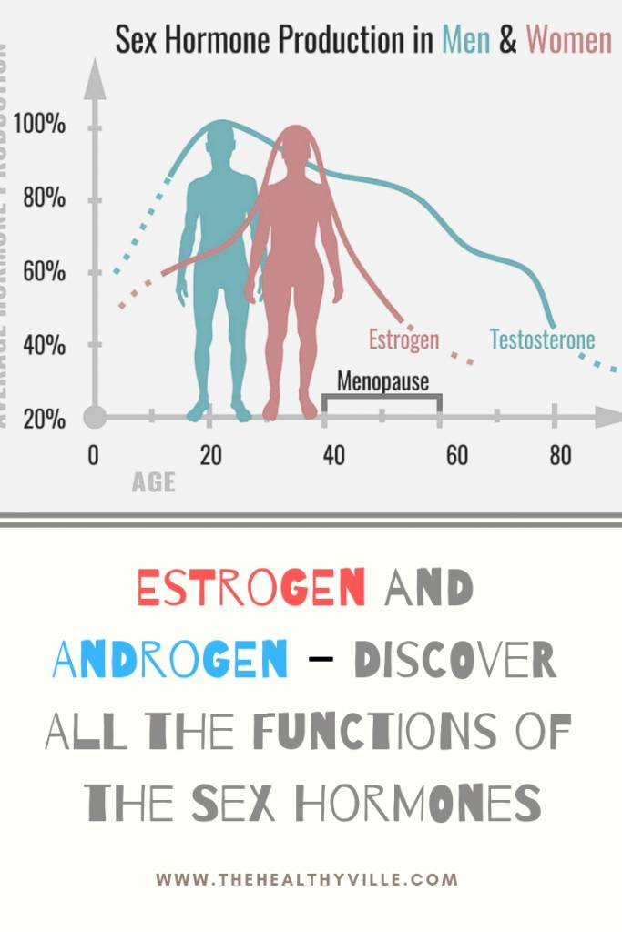 Estrogen and Androgen – Discover All the Functions of the Sex Hormones