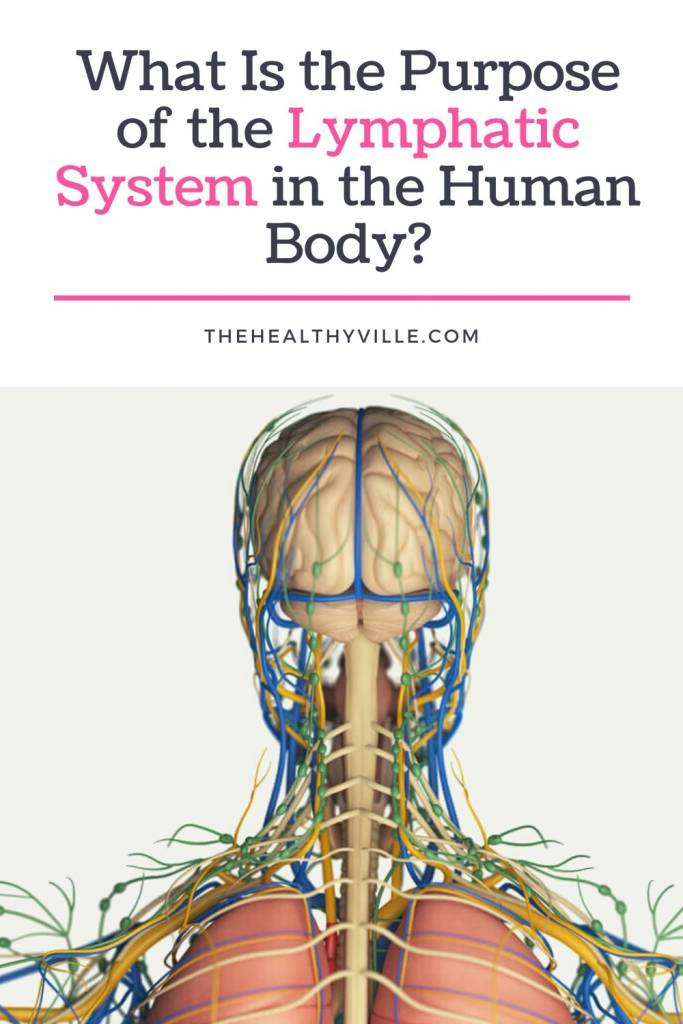 What Is the Purpose of the Lymphatic System in the Human Body_