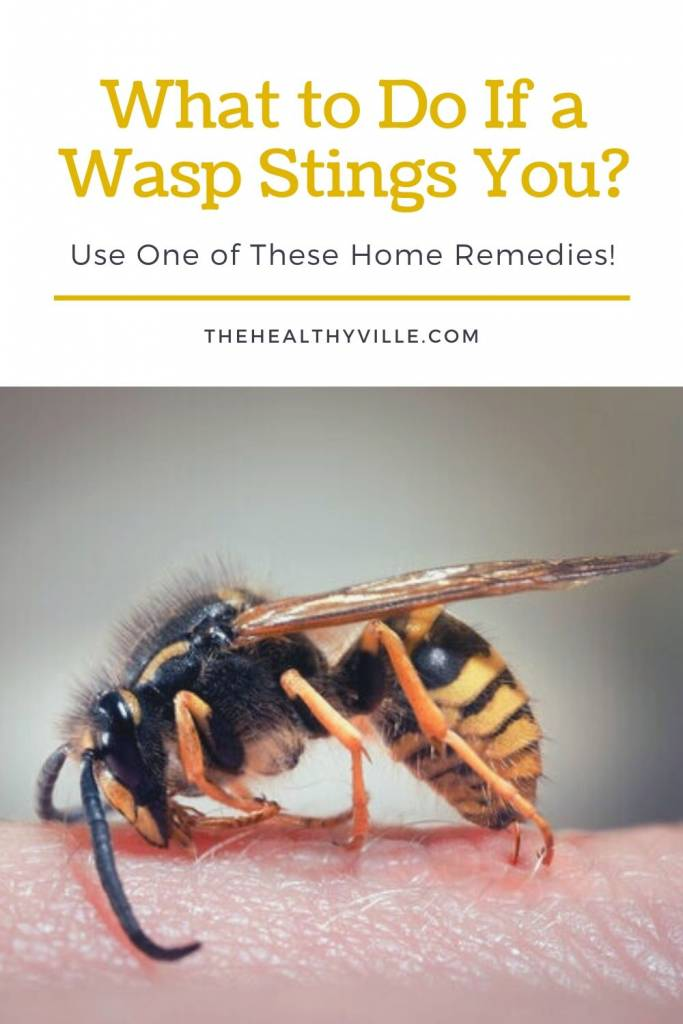 What to Do If a Wasp Stings You_ – Use One of These Home Remedies!
