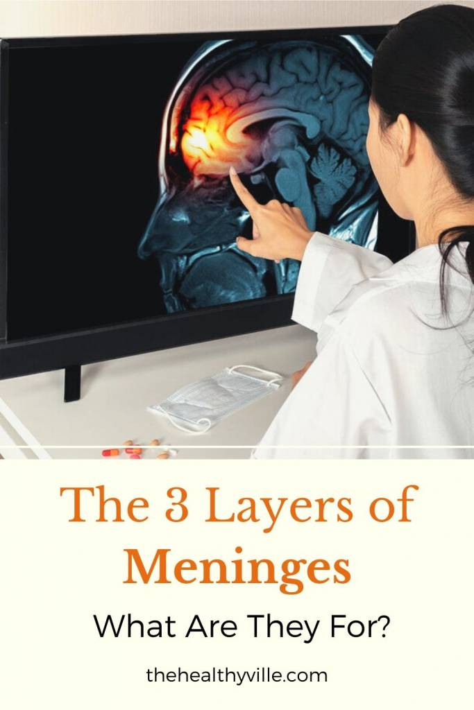 The 3 Layers of Meninges_ What Are They and What Are They For_
