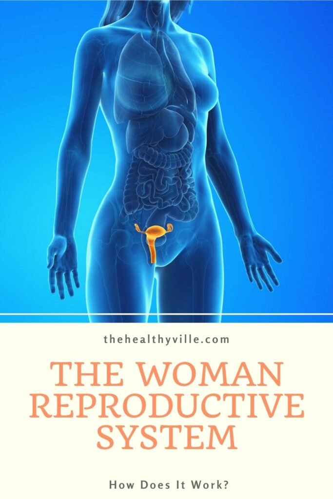 The Woman Reproductive System – How Does It Work