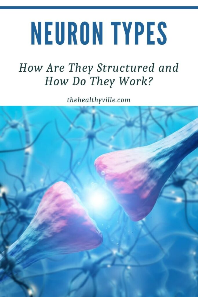 Neuron Types – How Are They Structured and How Do They Work